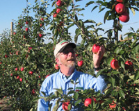 Dave rennhack in his SweeTango apple orcharad