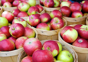 Apples at Orchards Farm Market
