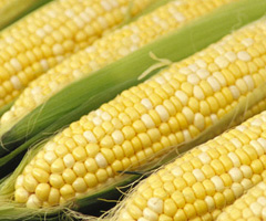 Sweet Corn from Rennhack Orchards Farm Market